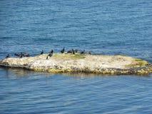 Cormoranes que descansan sobre una roca Imagenes de archivo