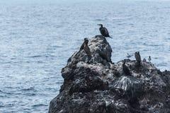 Cormoranes y gaviotas fotografía de archivo