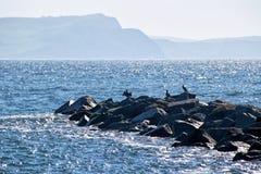 Cormorani al Cobb fotografie stock libere da diritti