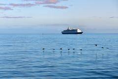 Cormorani e nave da crociera del capo Immagini Stock