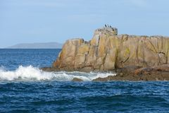 Cormorani su una roccia Fotografia Stock