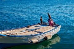 Cormorani sulla barca Immagini Stock