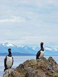 cormorans Photo libre de droits