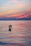 Cormorans au coucher du soleil Photographie stock