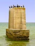 Cormorans blancs-breasted (lucidus de Phalacrocorax) ayant le repos sur le pilon énorme de pont sur la côte de l'Océan Atlantique photos stock