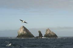 Cormorans die op de rots rusten Stock Afbeelding