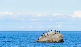 Cormorans em Gaspesie Fotos de Stock