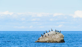 Cormorans in Gaspesie. Cormoran standing on a rock in the St-Lawrence river in Gaspesie, Quebec, Canada Stock Photos