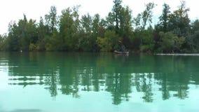 Cormorans su una piccola isola video d archivio