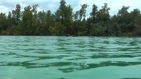 Cormorans su una piccola isola stock footage