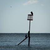 Cormorans sur la protection côtière Photo stock