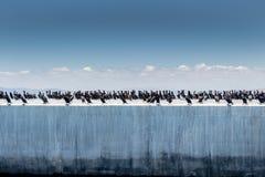 Cormorans sur le mur de port Photos stock