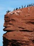 Cormorans sur les falaises rouges d'île Prince Edouard Image stock