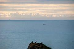 Cormorans sur une roche Images libres de droits