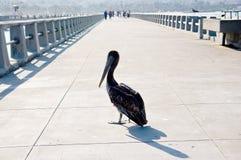Cormorant fotografie stock