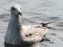 cormorant Стоковые Фотографии RF