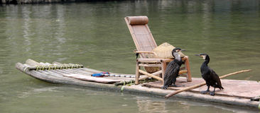 The cormorant and bamboo raft Royalty Free Stock Photos