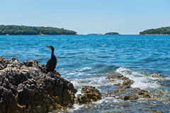 Cormorant on the beach in Istria Stock Photos