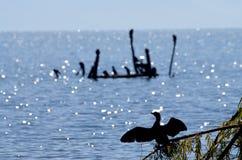 Cormorant birds in lake prespa, macedonia Royalty Free Stock Photography