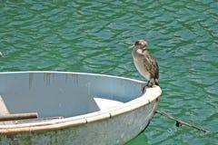 Cormorant on boat Royalty Free Stock Photos