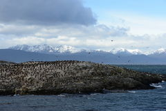 Cormorant colony on an island at Ushuaia in the Beagle Channel stock photo