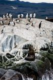 Cormorant colony on an island at Ushuaia in the Beagle Channel Beagle Strait, Tierra Del Fuego, Argentina.  Stock Photography