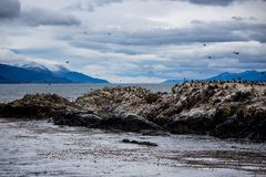 Cormorant colony on an island at Ushuaia in the Beagle Channel, Tierra Del Fuego, Argentina. Cormorant colony on an island at Ushuaia in the Beagle Channel Stock Photo
