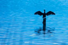 Cormorant drying its wings in the lake of Banyoles stock photos