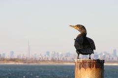 Cormorant e skyline com crista dobro de Manhattan imagem de stock