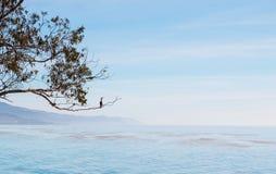Cormorant et paysage marin de la Californie Photos stock