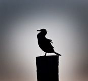 Cormorant in the evening mist Royalty Free Stock Photography