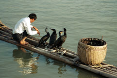 Cormorant Fishing. Traditional Chinese Fisherman in Southern China Stock Photo