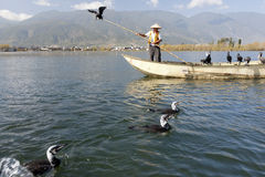 Cormorant Fishing in China Stock Photos