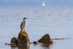 Cormorant. Fishing on mediterranean sea Stock Image