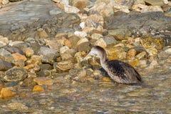 Cormorant. Fishing on mediterranean sea Royalty Free Stock Photos