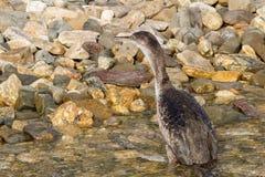 Cormorant. Fishing on mediterranean sea Royalty Free Stock Photo