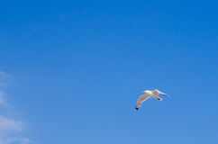 Cormorant flying in the sky Stock Photo