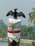 Cormorant, Kerala Royalty Free Stock Images