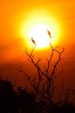 cormorant little Royaltyfri Foto