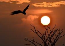 cormorant little Royaltyfria Bilder