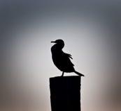 Cormorant na névoa da noite Fotografia de Stock Royalty Free