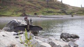 Cormorant nero che si siede sulla pietra e sulle ali di diffusione contro il contesto di un bacino idrico Isola di Olkhon Lago Ba stock footage