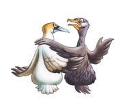 Cormorant och Booby Royaltyfri Fotografi