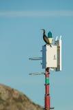 Cormorant Perched on a Navigation Light. Stock Photo