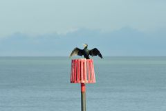 Cormorant on red marker post with wings spread Stock Photo