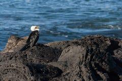 Cormorant resting on rocks Stock Photo