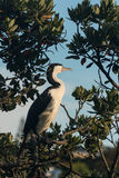 Cormorant resting on tree branch Stock Images