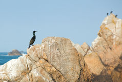 Cormorant on a rock Royalty Free Stock Photography
