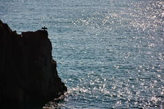 Cormorant on rock over sea Royalty Free Stock Images