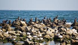 Cormorant on rocks Stock Photography